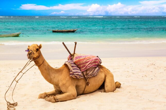 spiagge in africa